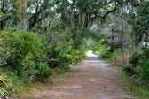 Jekyll island přírodní cesta — Stock fotografie