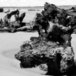Interesting  Driftwood on Jekyll Island — Stock Photo