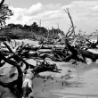 Scattered Driftwood on Jekyll Island — Stock Photo