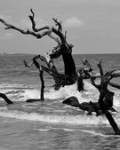 Driftwood in the Surf on Jekyll Island — Stock Photo