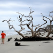 Amazing Driftwood on Jekyll Island — Stock Photo