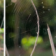 Collection spider web — Stock Photo #13839264