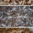 Fish tetra fried and raw collection - Stock Photo