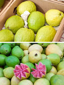 Guava collection — Stock Photo
