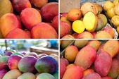 Fruta del mango colección — Foto de Stock
