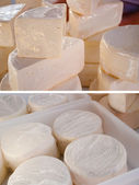 Collection cheese — Foto de Stock