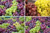Collection grape — Stock Photo