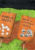 Seeds that make jack o lanterns — Stock Photo