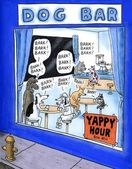 Yappy hour at the dog bar — Stock Photo