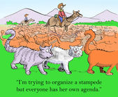 Cat tried to organize a stampede — Stock Photo