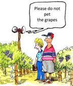 Do not pet the grapes — Stock Photo