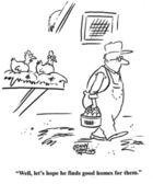 Pollo è triste che l'agricoltore ha preso le sue uova — Foto Stock