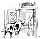 Cow goes in for milking twice daily — ストック写真