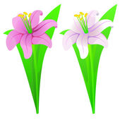 Lilies pink and white — Vector de stock