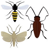 Insects illustration — Stock Vector