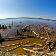 Snaged shore in Karelia — Stock Photo