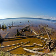 Snaged shore in Karelia — Stock Photo #30223639
