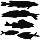 European fishes — Stock Vector