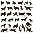 Dog collection. Vector silhouette - Stok Vektr