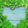 Ivy fixing climbing tree make heart shape on grunge wood backgro — Stock Photo