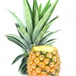 Closeup of cut pineapple isolated on white. — Stock Photo