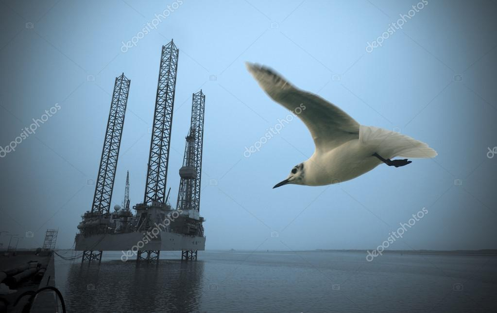 Oil rig close to harbour in Esbjerg and a wild seagull flying, Denmark.  — Stock Photo #12254173