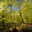 Forest in spring — Stock Photo