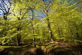 Bos in het voorjaar van — Stockfoto