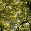 Stock Photo: Springtime Treetop