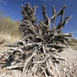Stock Photo: Driftwood on beach