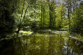 Springtime lake — Stockfoto