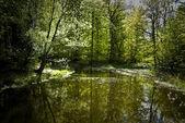 春の湖 — ストック写真