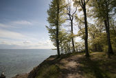 Forest path close to cliff — Stock Photo