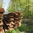 Stock Photo: Springtime wood boards