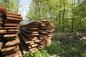 Springtime wood boards — Stock Photo