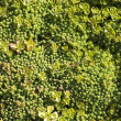 Stock Photo: Mossy Macro