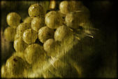 Abstract white wine grapes — Stock Photo