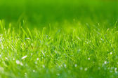 Green grass. with drops of dew. close-up — Stock Photo