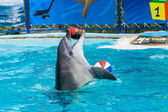 Dolphins and other marine animals performs trick submission — Stock Photo