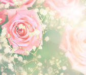 Rose background in light colors — Stock Photo