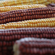 Stock Photo: Sweet corn