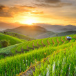 Rice Terraces in Northern of Thailand — Stock Photo #31636285