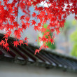 Red maple leaves are cover the japan style roof  — Stock Photo