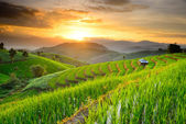 Rice Terraces in Northern of Thailand — Stock Photo