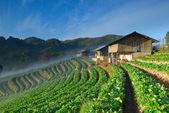 Linda fazenda de morango e tailandês agricultor casa na colina — Foto Stock