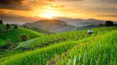 Terrazas de arroz con telón de fondo al atardecer en el ban papongpieng chiangmai — Foto de Stock