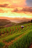 在禁令 papongpieng 清迈日落背景与水稻梯田 — 图库照片