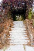 Autumnal stairs — Stock Photo