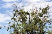 Drzewa i niebo — Zdjęcie stockowe
