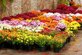 Blumengeschäft — Stockfoto